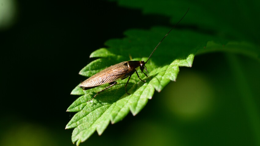Comment empêcher les blattes de jardin de rentrer dans la maison ?
