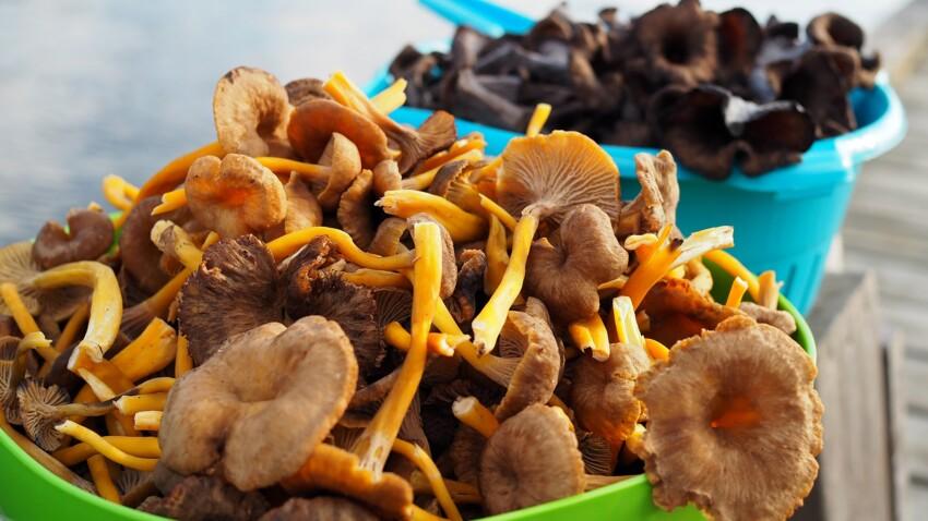 Rosés des prés, cèpes, girolles… Comment congeler les champignons ?