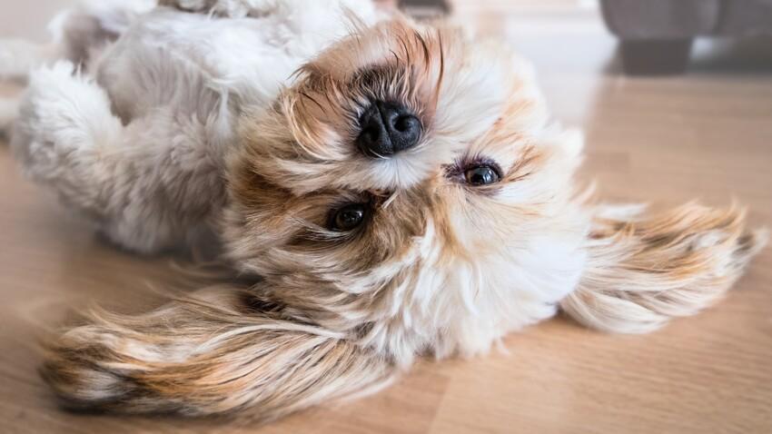 Les propriétaires de chien seraient en meilleure santé, selon une étude