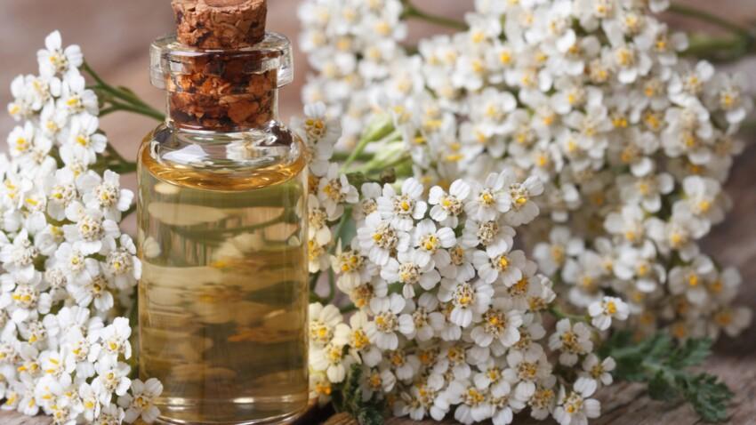 Phytothérapie : 15 fleurs qui permettent de se soigner toute l'année