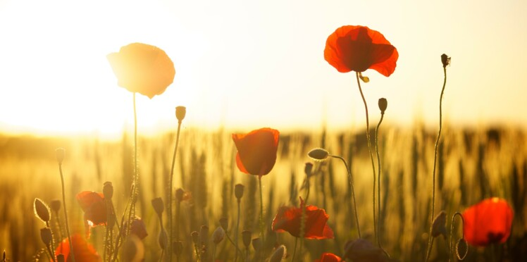 Les pouvoirs des fleurs : découvrez celle qui correspond à votre signe