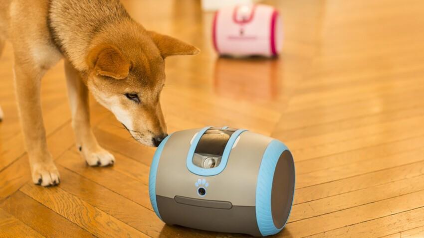 Collier GPS, gamelle à reconnaissance faciale… Les animaux sont connectés !