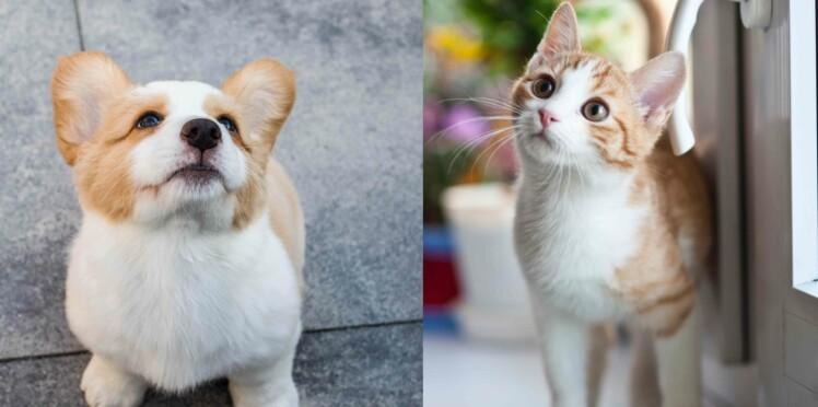 """Chien et chat : les meilleurs prénoms en """"R"""" pour 2020"""