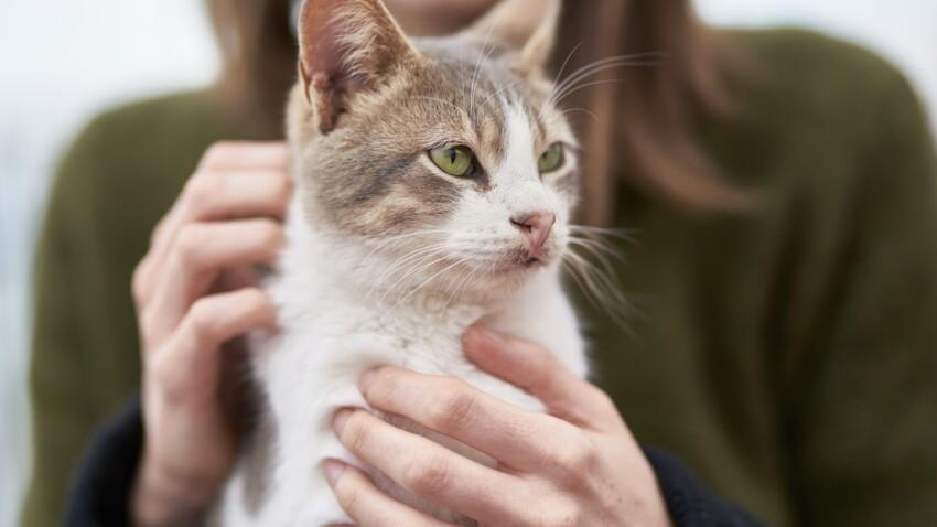 Les chats considèreraient leurs maîtres comme leurs parents
