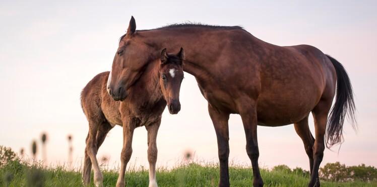 Sauver les chevaux de la Garde Républicaine : c'est possible !