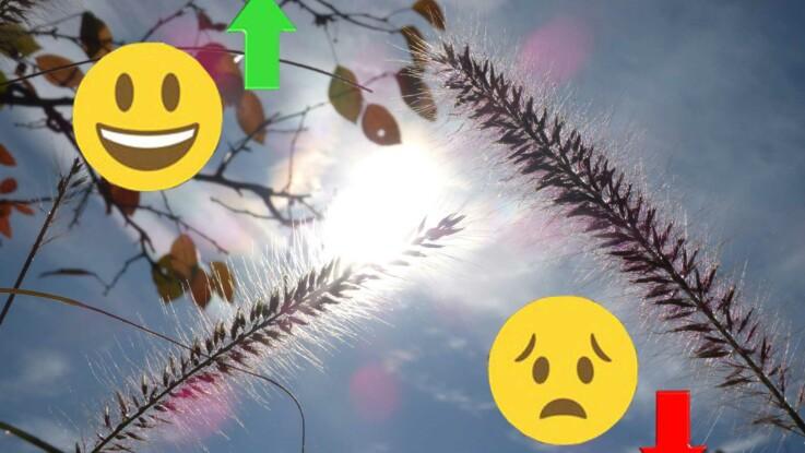 Horoscope de novembre 2019 : les signes au TOP... et les flops