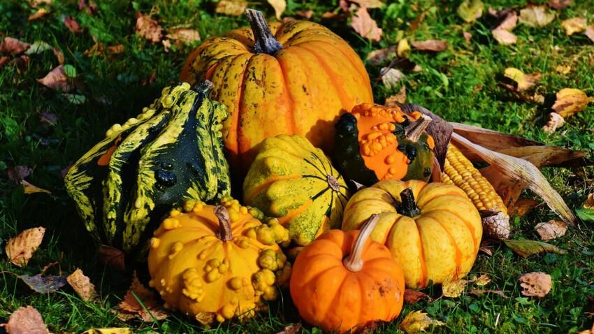 Halloween : attention aux intoxications, les courges ne sont pas toutes mangeables !