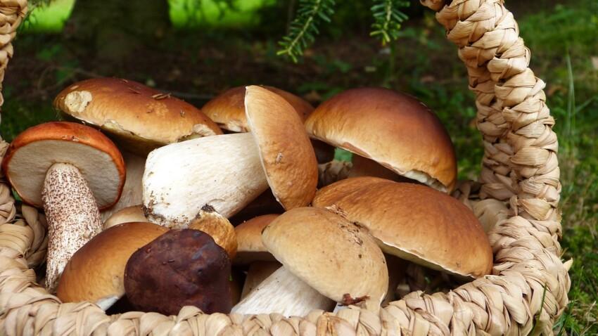 Nos meilleures recettes de champignons farcis faciles et rapides