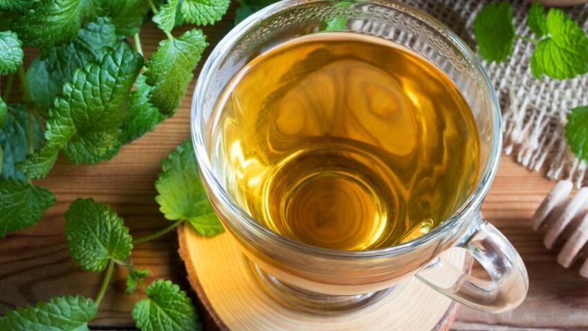 Melissa officinalis: 10 remèdes maison à base de mélisse