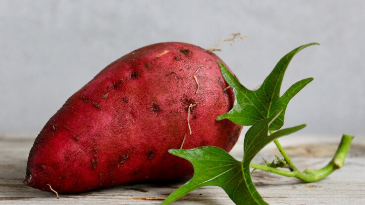 Tout savoir sur la patate douce