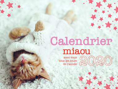 Calendrier Miaou 2020