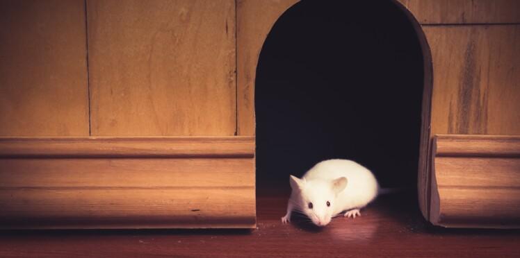 Comment se débarrasser des souris dans la maison ?