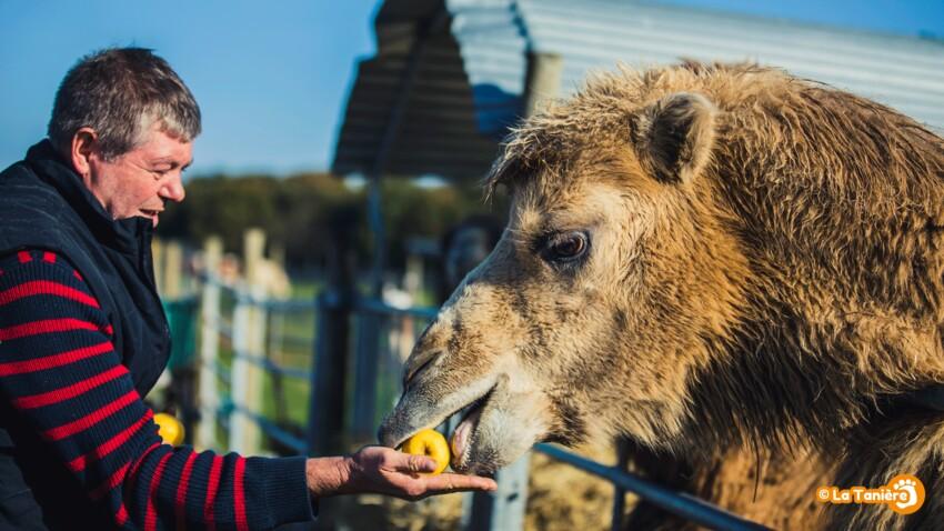 Chiens, vaches, chameaux… ils ont droit à la retraite aussi !