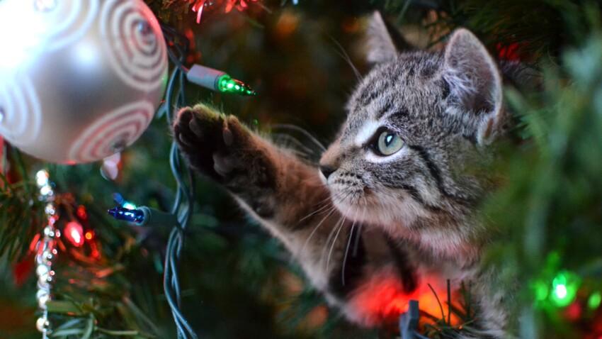 Déco de Noël : danger pour vos animaux !