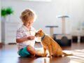 Herpès circiné: une infection de la peau transmise par les chats et les lapins