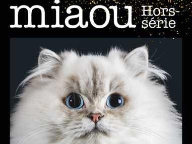 MIAOU : Les chats photographiés comme des stars de cinéma