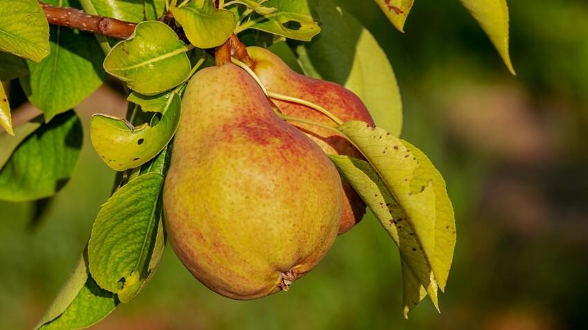 Comment pocher des poires ?