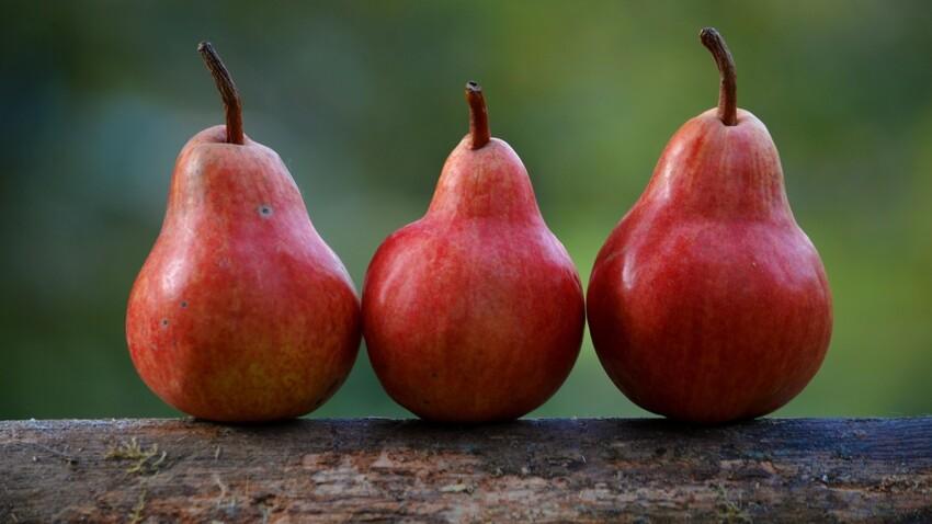 Comment conserver des poires ?