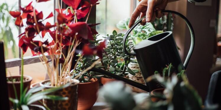 Quelle plante dans mon entrée ?