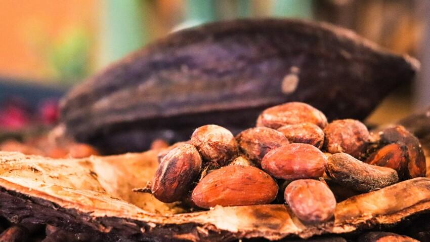 La grande aventure du cacao