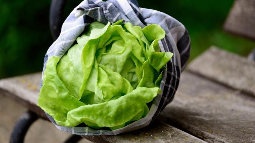 Comment redonner du croquant à une salade flétrie ?