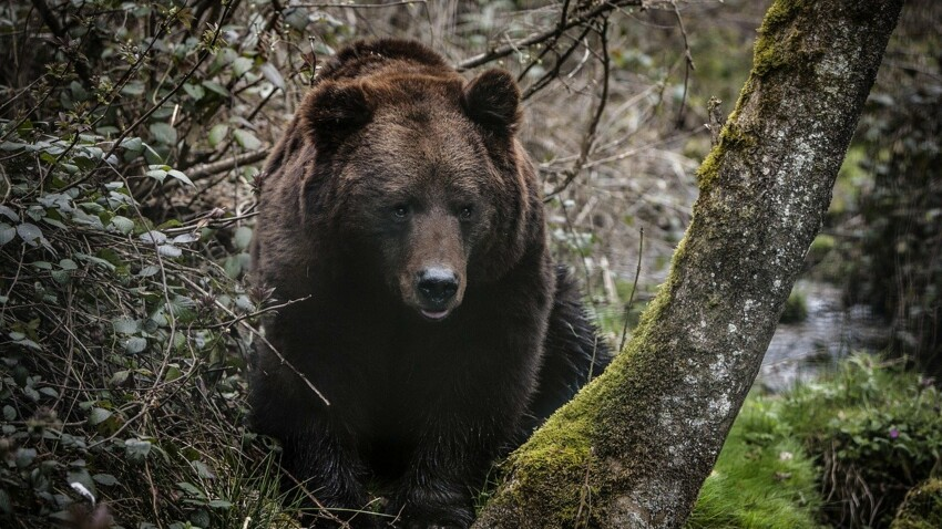 Zoom sur les mammifères de nos forêts
