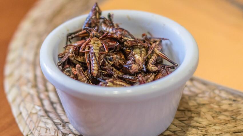 Des insectes dans notre assiette ? Une nouvelle tendance culinaire
