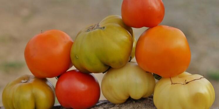 7 variétés de tomates à (re)découvrir