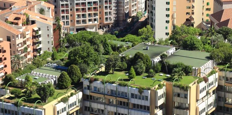 Forêts urbaines: les citadins reboisent les villes