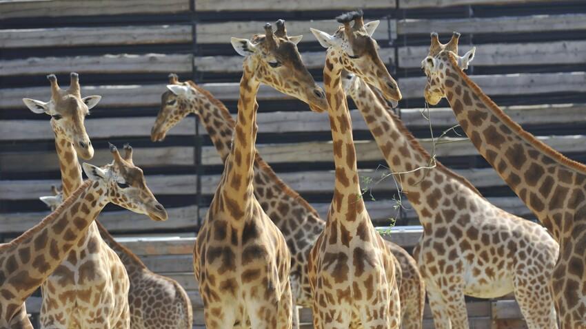 Tout savoir sur le Parc zoologique de Paris