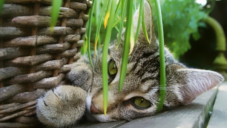 Quelles sont les plantes d'intérieur toxiques pour votre chat ?
