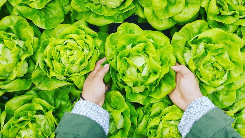 Salades : 7 variétés pour un été plus léger