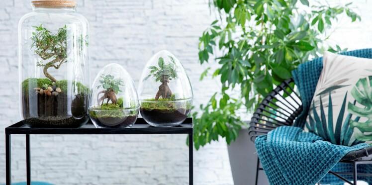 Déco : 4 astuces pour végétaliser son intérieur