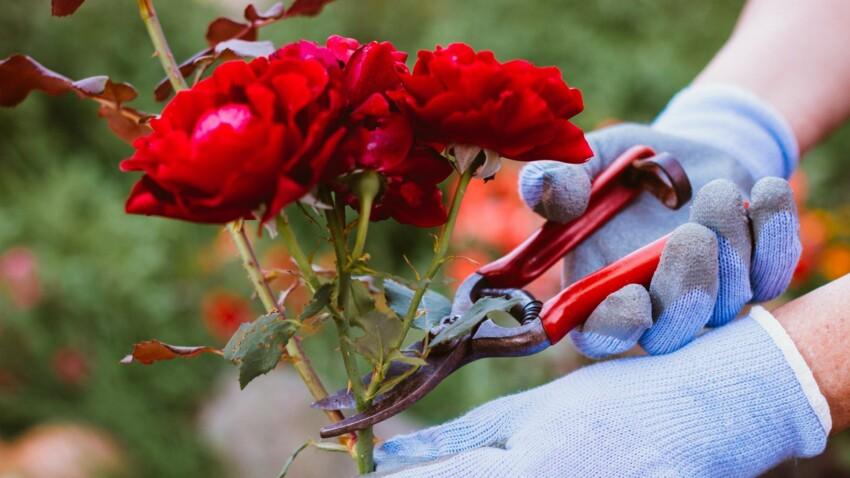 Arbustes à fleurs: c'est l'heure de la coupe d'hiver