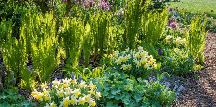 Narcisses, tulipes, forsythias : comment aménager un jardin fleuri