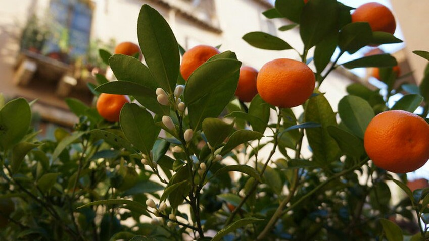 Tour savoir sur l'orange