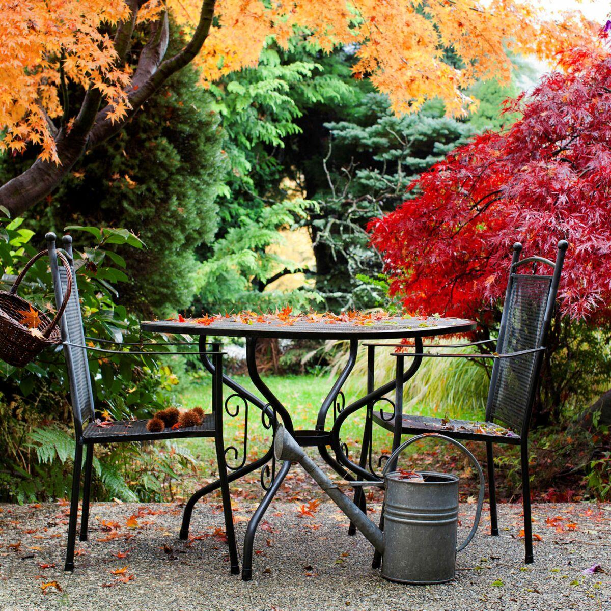 Arbuste Persistant Pour Pot arbres et arbustes : nos conseils pour bien les choisir et