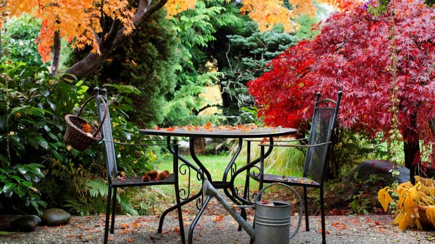 Arbres et arbustes : nos conseils pour bien les choisir et les planter
