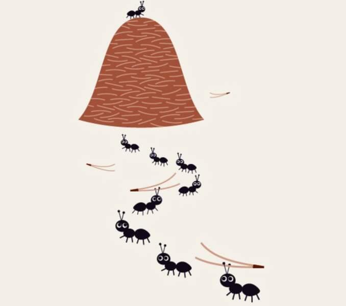La colonie de fourmis