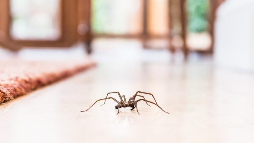 Araignées, mouches, mites, souris, cafards, termites... : 3 recettes naturelles pour se débarrasser des nuisibles dans la maison