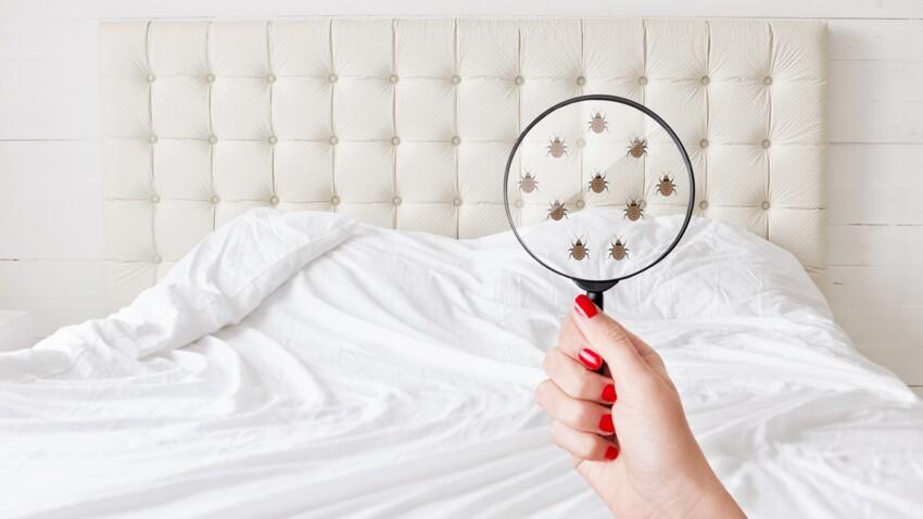 Comment savoir si j'ai des punaises de lit ? 9 endroits à vérifier d'urgence