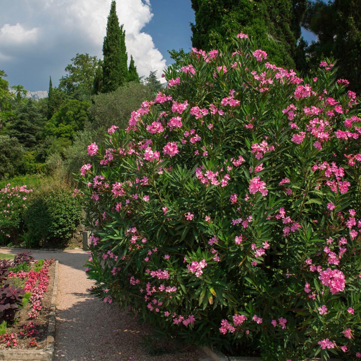 Plantes Pour Mur Végétal Extérieur 7 plantes d'extérieur qui poussent rapidement : femme