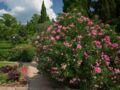 7 plantes d'extérieur qui poussent rapidement