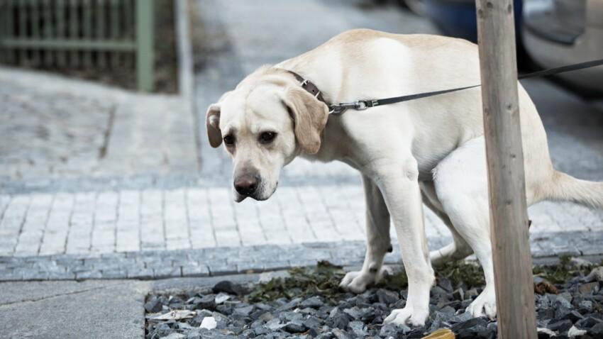 Que risque-t-on si l'on ne ramasse pas les crottes de son chien ?