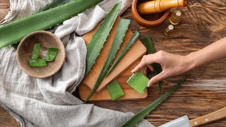 Quels sont les bienfaits de l'Aloe vera ?