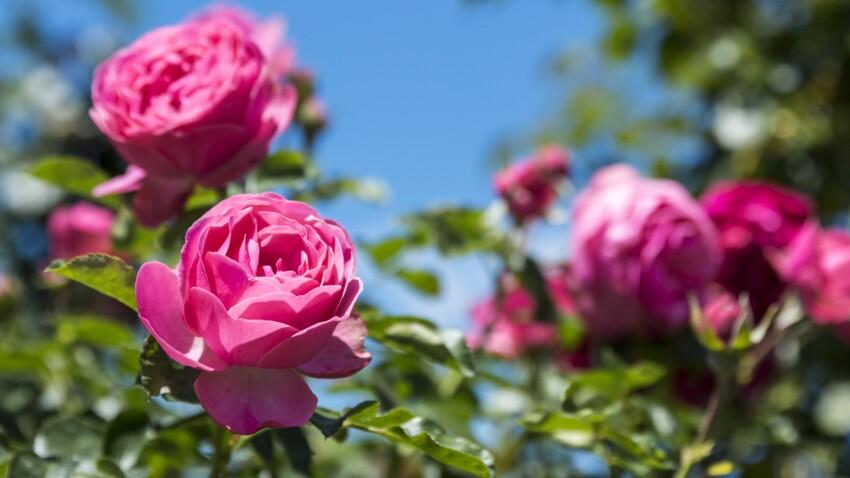 Comment avoir des fleurs plus colorées au jardin ?