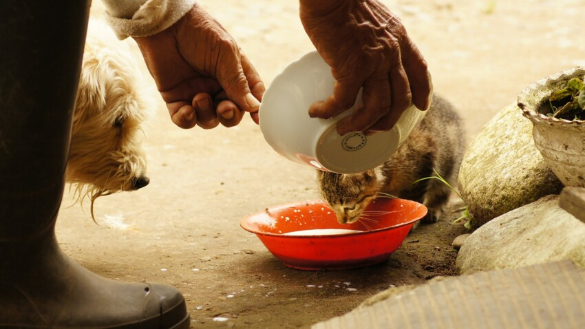 Coronavirus : la SPA redoute les abandons d'animaux