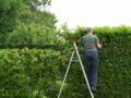 Jardin : quelles plantes pour s'abriter des regards ?