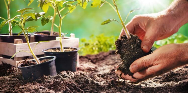 Jardin : 3 astuces pour réussir ses semis