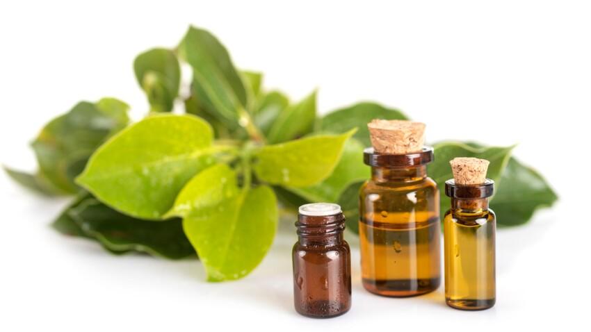 Ravintsara : comment l'utiliser pour booster ses défenses immunitaires ?